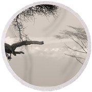 Leopard Resting On A Tree Round Beach Towel