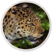 Round Beach Towel featuring the photograph Leopard by Steve Stuller