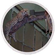 Leopard Tree Cat Preying Round Beach Towel
