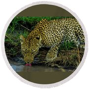 Leopoard Drinking At A Pond Round Beach Towel