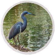 Lesser Blue Heron In Mating Plumage Round Beach Towel