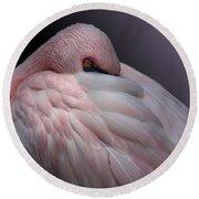 Lesser Flamingo Resting Round Beach Towel