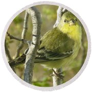 Lesser Goldfinch 1 Round Beach Towel