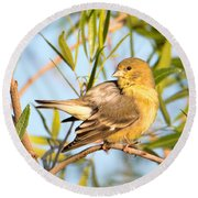 Round Beach Towel featuring the photograph Lesser Goldfinch by Dan McManus