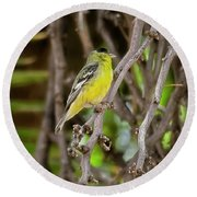 Round Beach Towel featuring the photograph Lesser Goldfinch H57 by Mark Myhaver
