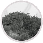 Lesser Horned Owl Round Beach Towel by Sandy Taylor