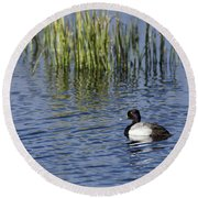 Lesser Scaup Adult Male Round Beach Towel