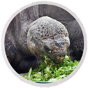 Round Beach Towel featuring the photograph Lettuce Makes You Strong by Miroslava Jurcik