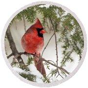 Leucistic Northern Cardinal Round Beach Towel