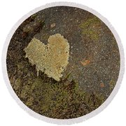 Round Beach Towel featuring the photograph Lichen Love by Mike Eingle
