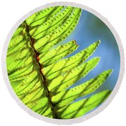 Round Beach Towel featuring the photograph Life Behind The Fern by T Brian Jones