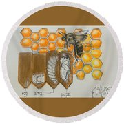 Life Cycle Of A Bee  Round Beach Towel