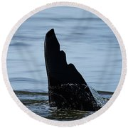 Round Beach Towel featuring the photograph Life Cycle - Wildlife Art by Jordan Blackstone