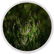 Light And Shadows On Common Heathers Round Beach Towel