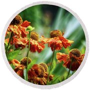 Light In The Garden Round Beach Towel by Cameron Wood