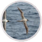 Light-mantled Albatross Duo Round Beach Towel