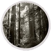 Light Through Redwoods Round Beach Towel