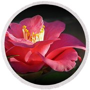 Round Beach Towel featuring the photograph Lighted Camellia by AJ Schibig
