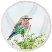 Lilac Breasted Roller. Round Beach Towel