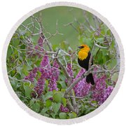 Lilacs And Yellowhead Blackbirds Round Beach Towel