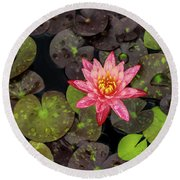 Lilly Pad, Red Lilly Round Beach Towel