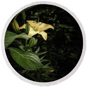 Round Beach Towel featuring the photograph Lily In The Garden Of Shadows by Marco Oliveira