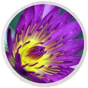 Lily On The Water Round Beach Towel