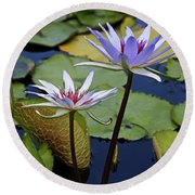 Round Beach Towel featuring the photograph Lily Trio by Judy Vincent