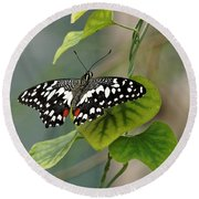 Round Beach Towel featuring the photograph Lime/chequered Swallowtail Butterfly by Paul Gulliver