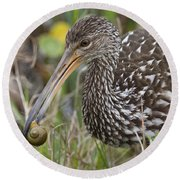Limpkin, Aramus Guarauna Round Beach Towel