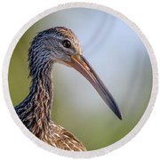 Limpkin Portrait Round Beach Towel