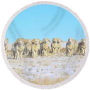 Line Em Up Rams Round Beach Towel