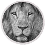 Round Beach Towel featuring the photograph Lion 5716 by Traven Milovich
