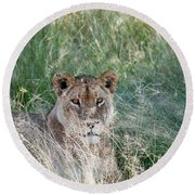 Lion Round Beach Towel