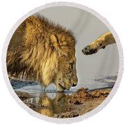 Lion Affection Round Beach Towel