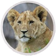 Lion Cub Close Up Round Beach Towel