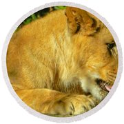 Lion Cub - What A Yummy Snack Round Beach Towel by Emmy Marie Vickers
