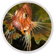 Lion Fish 2 Round Beach Towel by Kathryn Meyer