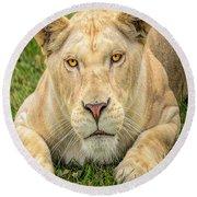 Lion Nature Wear Round Beach Towel