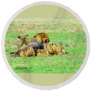 Lion Pride With Cape Buffalo Capture Round Beach Towel