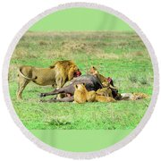 Lion Pride With Cape Buffalo Round Beach Towel