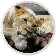 Lion Resting Round Beach Towel