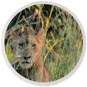 Lion Warily Watching Round Beach Towel
