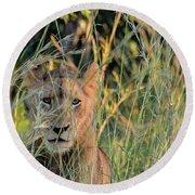 Lion Warily Watching Round Beach Towel