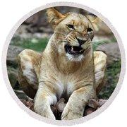 Lioness 2 Round Beach Towel