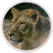 Lioness Round Beach Towel