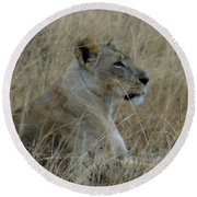Lioness In The Grass Round Beach Towel