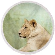 Lioness Portrait II Round Beach Towel by Wade Brooks