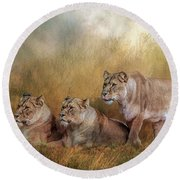 Lionesses Watching The Herd Round Beach Towel by Brian Tarr