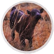 Little Angus Bull Calf Round Beach Towel